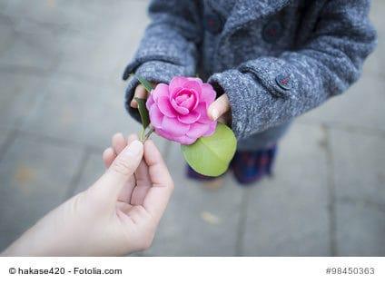 Blume, Hände