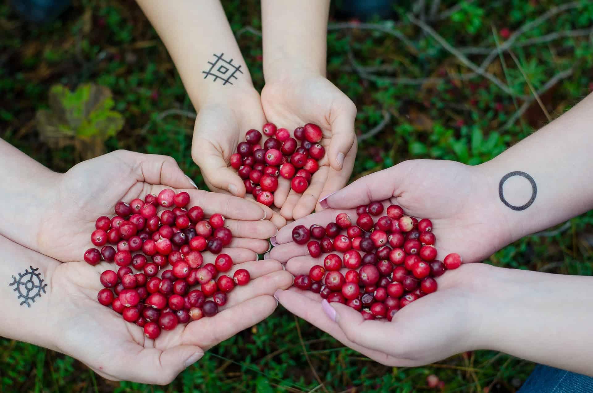 Früchte - pixabay
