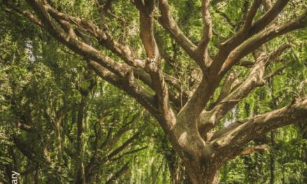 Stark, wie ein Baum