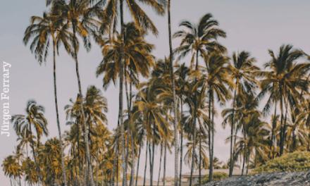 Die Gott lieben, werden gedeihen wie Palmen