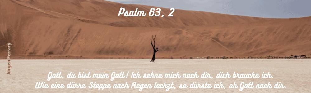 Ein Baum im Wüstensand