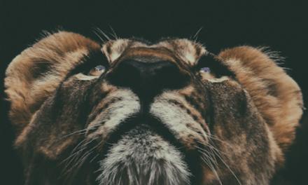 Sicher wie ein Löwe – oder ständig auf der Flucht?!?