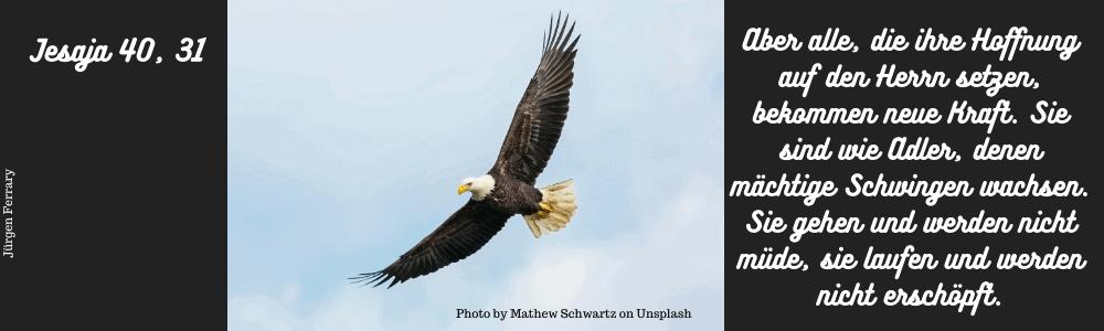 fliegender Adler