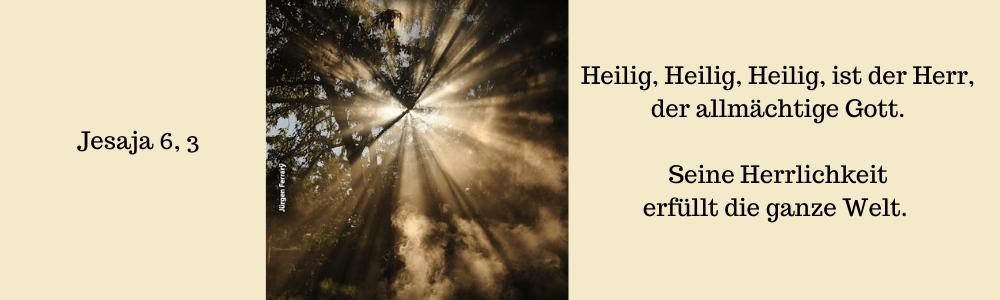 Sonnenstrahlen scheinen durch Baumkronen