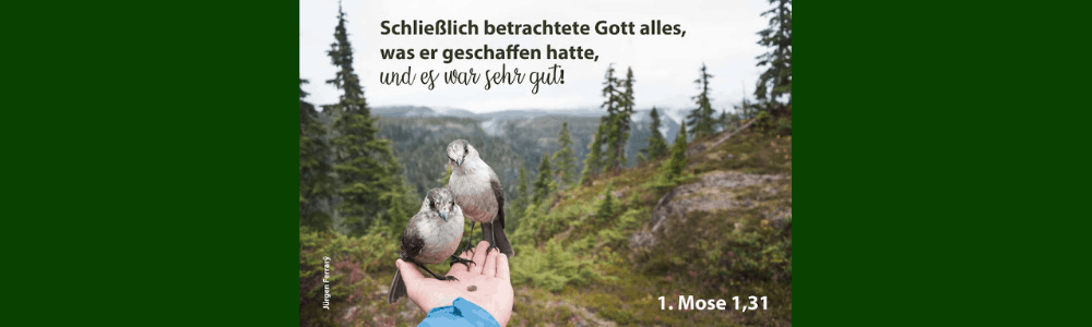 zwei Vögel sitzen auf der Hand auf einem Waldweg
