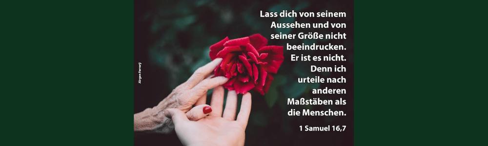 Eine alte und junge Hand berühren eine Rose